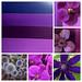 Autumn Purple — Leanne and David Kesler, Floral Design Institute, Inc., in Portland, Ore.