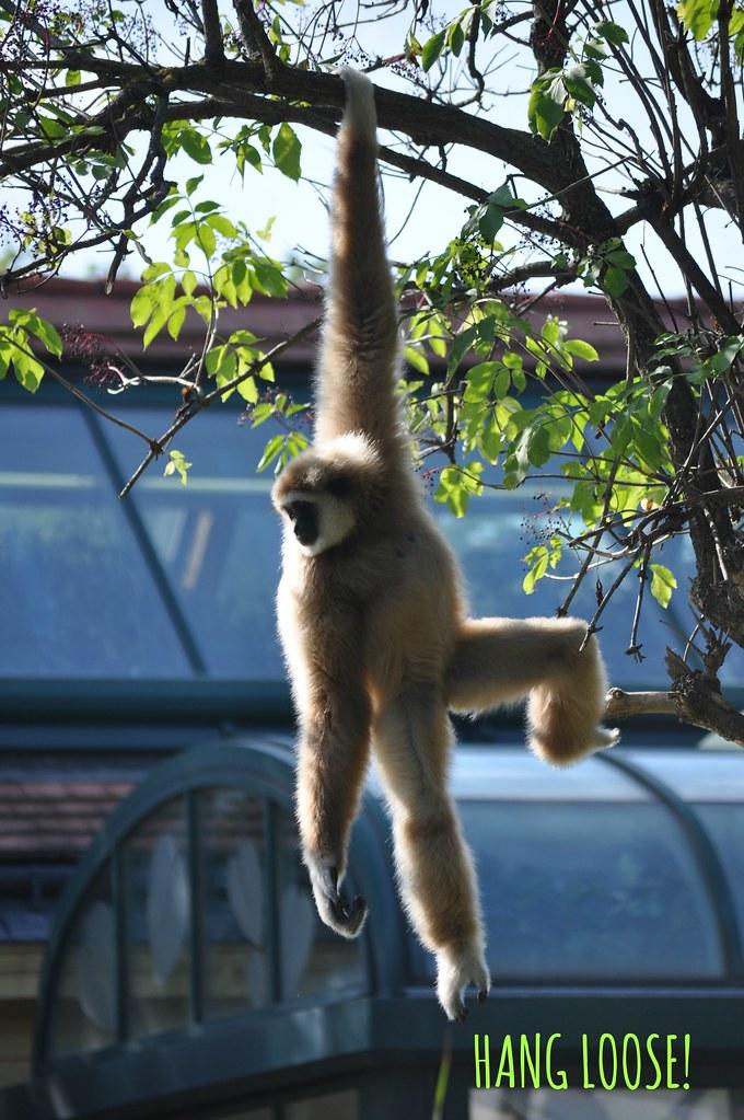 6 b hanging loose!