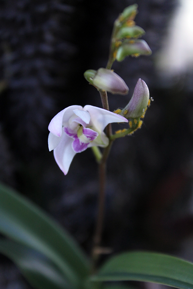 piccolissima fiori