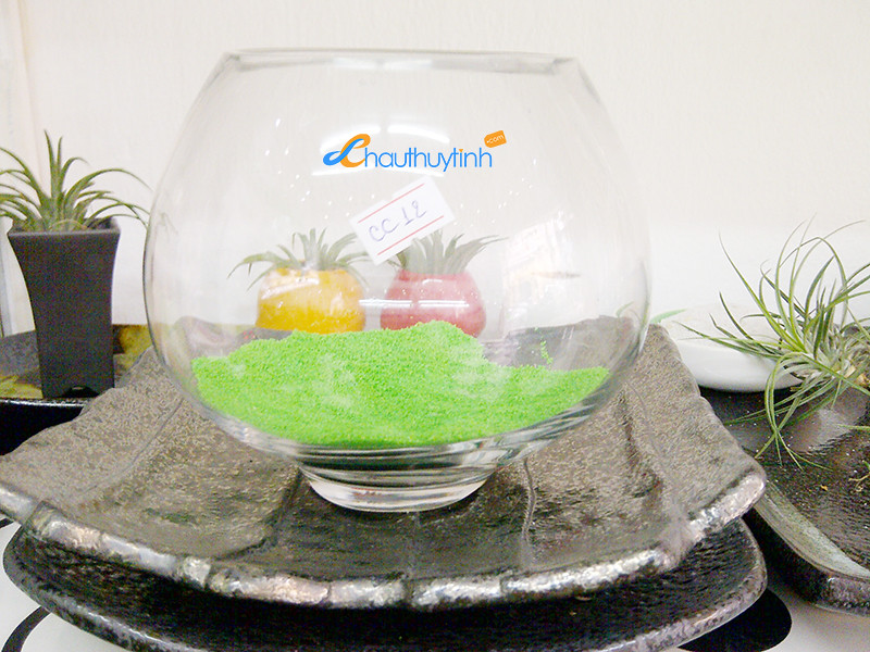 caykhongkhi24h.com | cay khong khi | tieu canh khong khi | air plant | art plant | ban khong khi toan quoc | ban si khong khi | phu lieu | cat mau