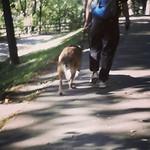Fluffy doggie paparazzi