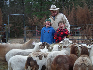 Picture of a man and two boys laughing with the sheep