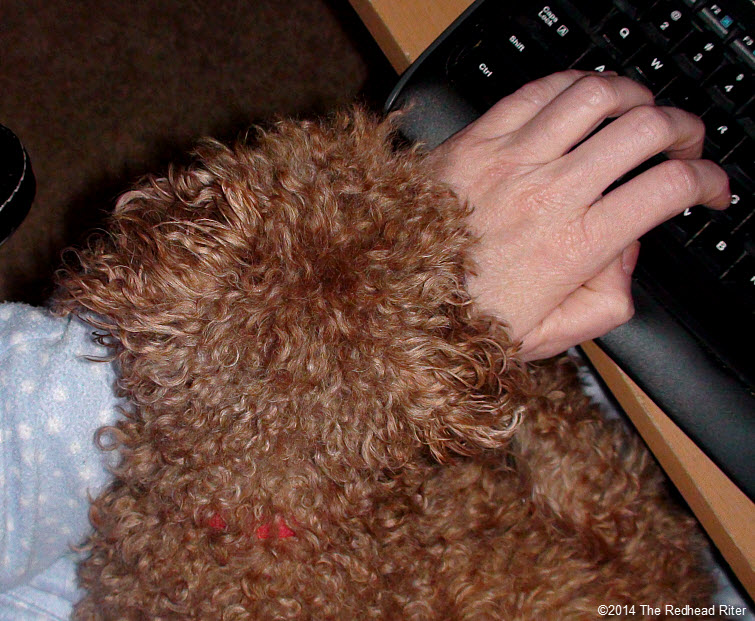 red toy poodle dog resting head on hand while typing on computer