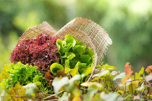 由紅紅綠綠的沙律菜束成的花球,不但好看還好吃呢!