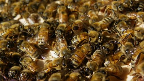 Bees, September '14