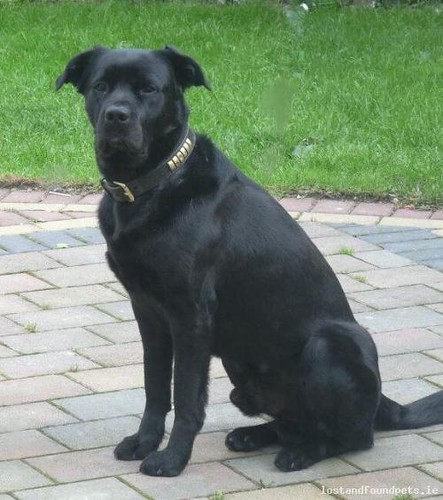 Sat, Aug 2nd, 2014 Lost Male Dog - Glyde Road, Louth