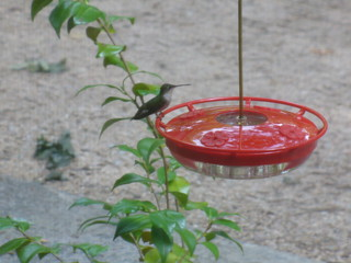 Hello, hummingbird!