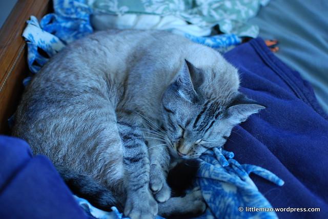 chun in his sleepy nest