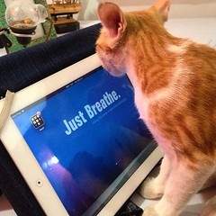 #Smartcat #TomCat using #ipad, as he asks me to #JustBreathe and loose some #stress at work. #Cute #Kitten #Technology #Nature