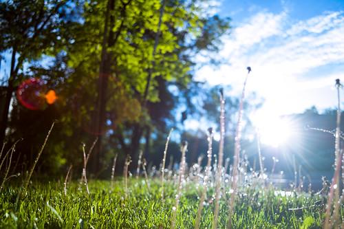 sunset droplets spring colorado lawn boulder goldenhour dandelions m9 glisten 2014 elmarit 28mmf28 whatimseeing residualmoisture
