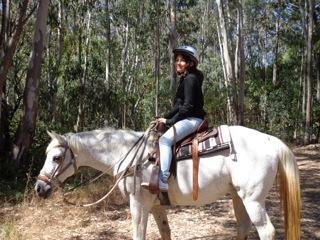 Horses T2
