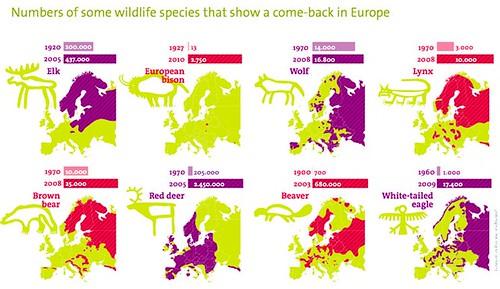 倫敦動物學會2013年底發佈的「野生回歸歐洲」(Wildlife Comeback Europe)報告呈現了50年內歐洲地區37種原生鳥類及哺乳類的增加情形(圖片來源:Rewilding Europe Brochure)