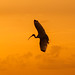 Great Heron's Sunset 2 by Rongzoni
