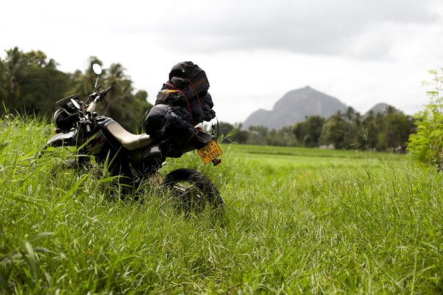 The bike in the middle of paddy fields