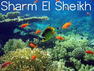 Viaje buceo Sharm el sheikh