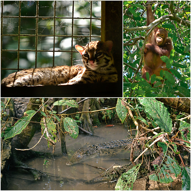 Matang Wildlife Centre