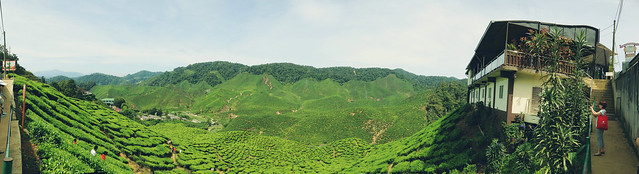 Cameron Valley: Cameron Bharat Plantations