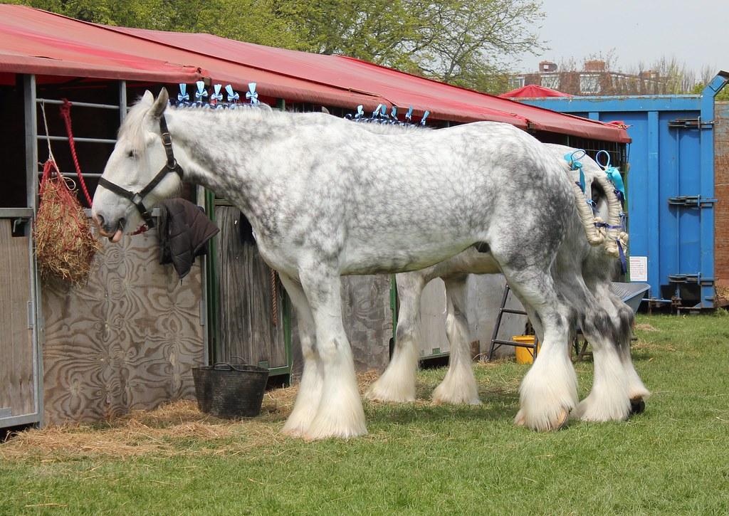 Southsea Heavy Horse Parade