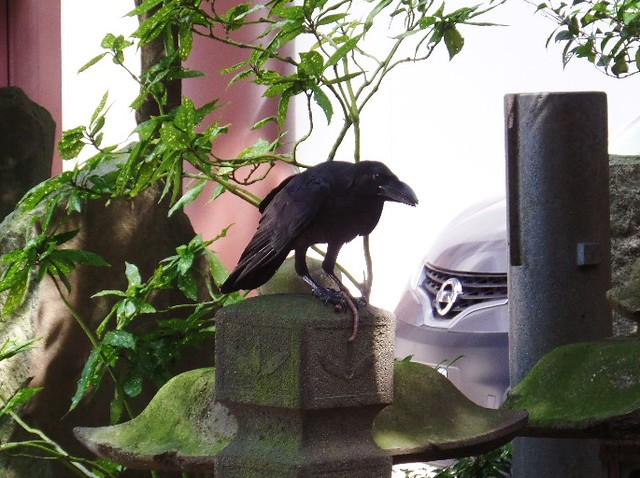 Crow with Worm at Nishiarai Daishi temple