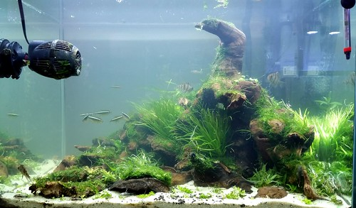 33g New Aquascape