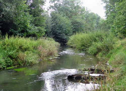 Naturnahe Werrn in Arnstein, NGID819393433