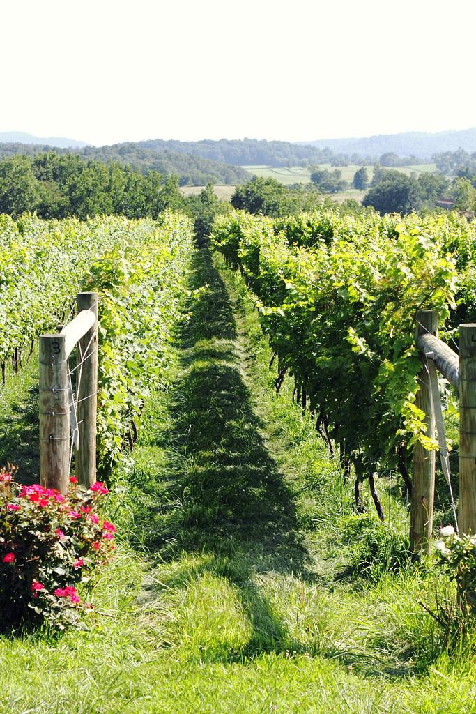 vineyard to vineyard