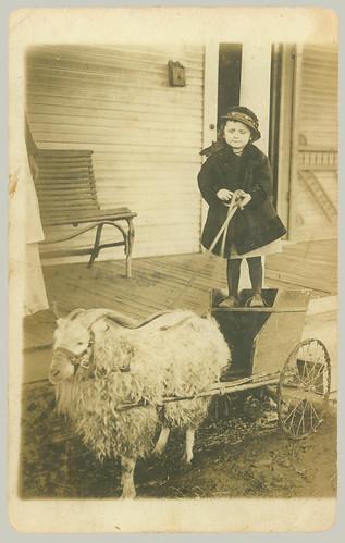 RPPC Goat Cart