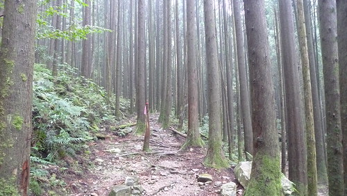 20140809-橫嶺山步道 (23)