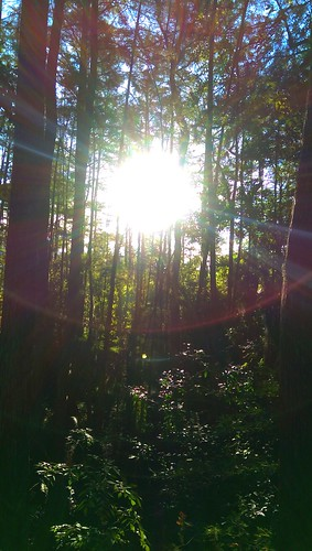 nature forest sunrise florida swamp sunrays ucf studentunion htc