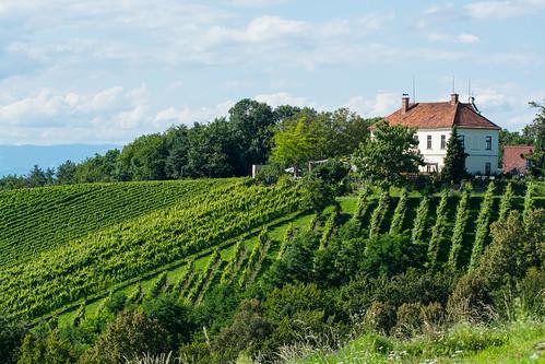 summer macro landscape österreich nikon sommer vineyards tamron 90mm landschaft vc steiermark usd 2014 kaindorf weinberge südsteiermark kogelberg d7100 southstyria