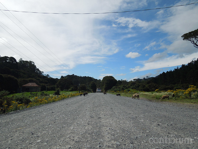 Header of 309 Road