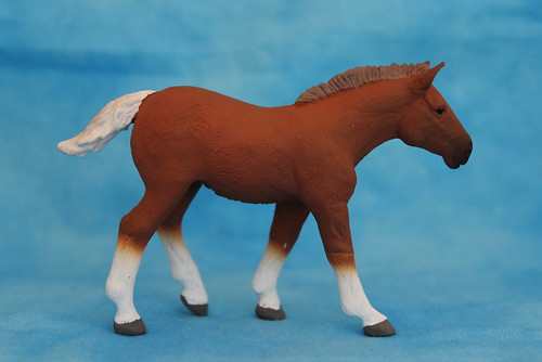 Walkaround of the 2014 Mojo Fun Suffolk Punch Foal 15064219422_c6dd3795d3