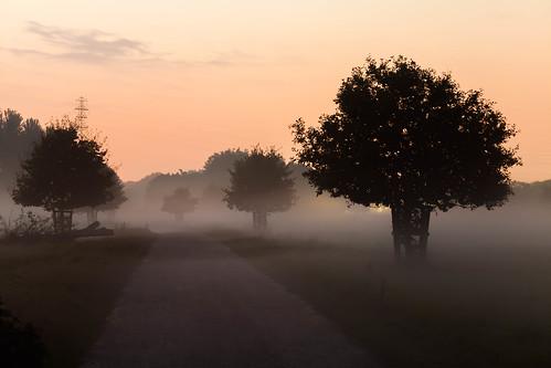 trees mist exeter