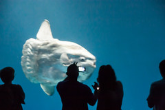 Sunfish Picture-Taking
