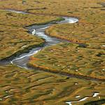 Landimore Marsh