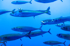 Mackaral Swim