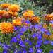 Judith's garden - by rotraud_71