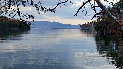 smithmountainlakestatepark lake water trail hike tree branch gumballs calm blue serene mountain view park outdoor