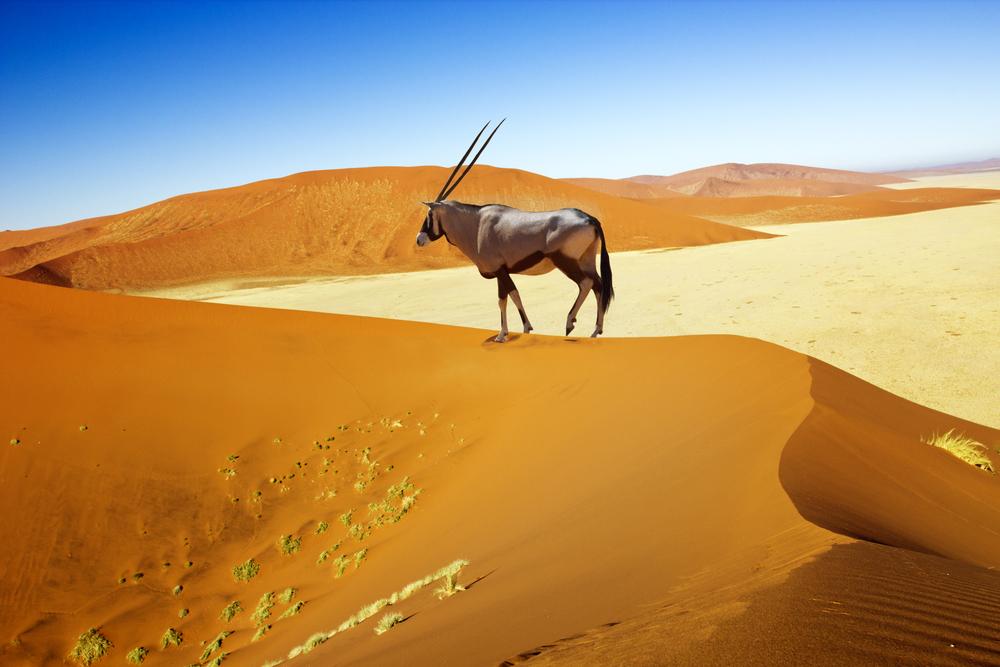Sossuvlei in Namibia