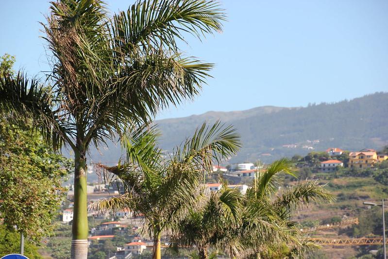 Madeira, Funchal 2014 + ostokset 304