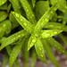 Rain-Soaked Plants, Macro by cobalt123