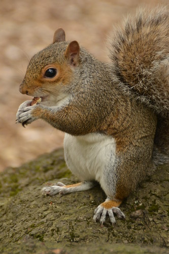 459 - Edinburgh - botanic gardens - Squirrel