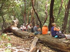 Soquel Demonstration Forest