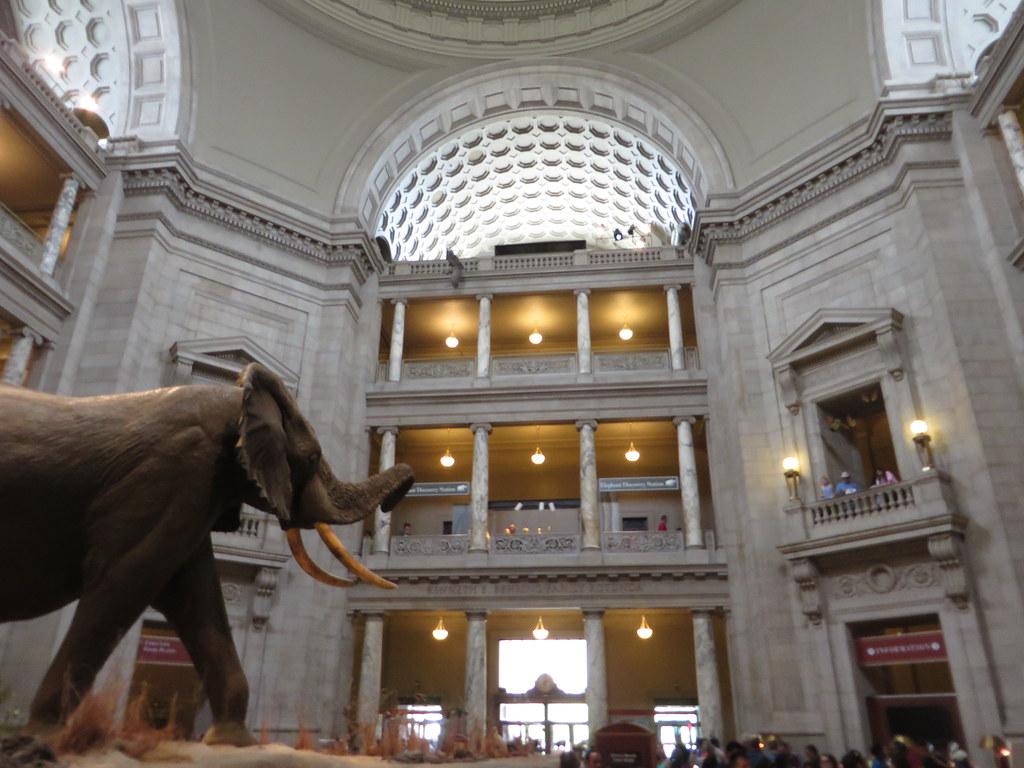Rotunda, National Museum of Natural History, Washington, D.C.