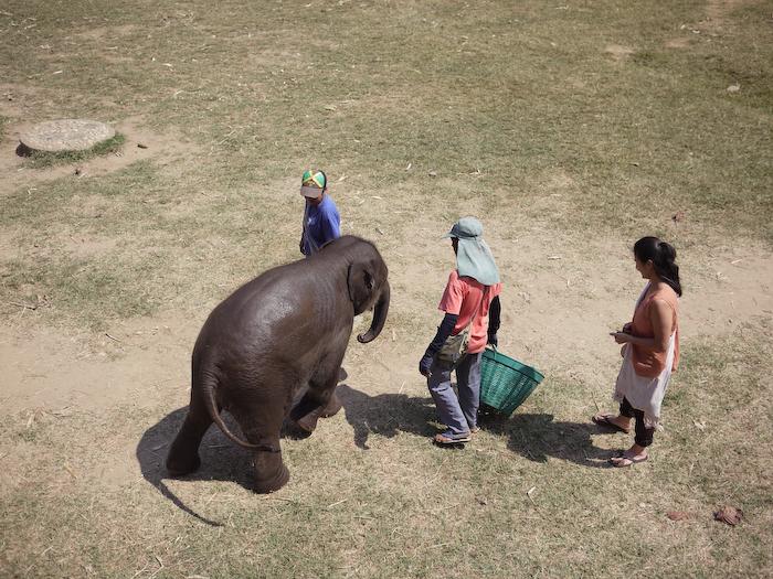 Elephant Nature Park Chiang Mai-25