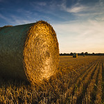 [124] Bale Of Straw