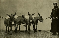 """Image from page 184 of """"Our domestic animals, their habits, intelligence and usefulness;"""" (1907)"""