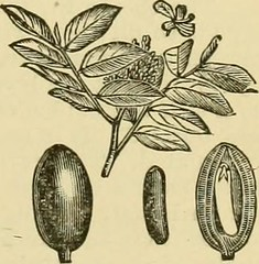 """Image from page 376 of """"Smiley's cook book and universal household guide; a comprehensive collection of recipes and useful information, pertaining to every department of housekeeping .."""" (1895)"""