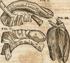 "Image from page 155 of ""Anatomiae amphitheatrvm effigie triplici, more et conditione varia, designatvm"" (1623)"