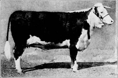 "Image from page 296 of ""Western agriculture"" (1918)"